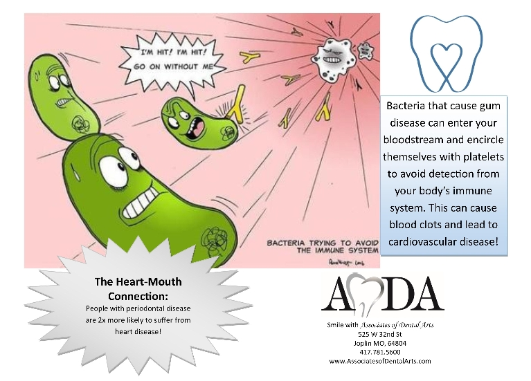 Infographic White blood cells attack bacteria Heart Mouth connection Gum disease and heart disease